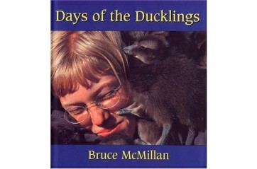 Days of the Ducklings