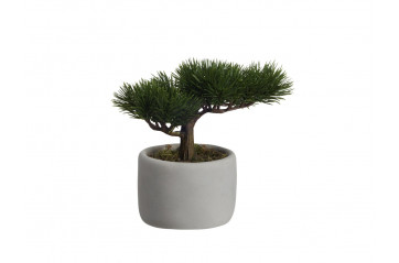 Asa - Gerviblóm Bonsai Tré í Potti Mini Pine