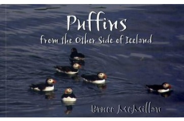Puffins from the other side of Iceland
