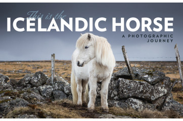 This is the Icelandic horse